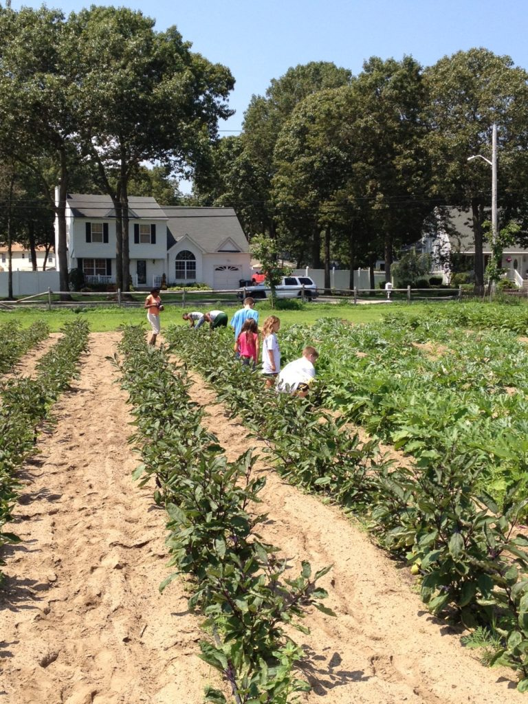 School Trips HeartBeet Farms