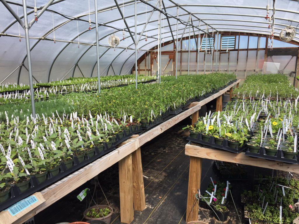Greenhouse - HeartBeet Farms