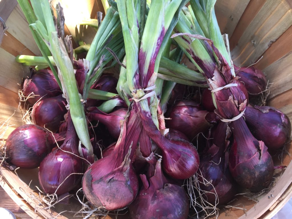 Organic Red Onions from HeartBeet Farms