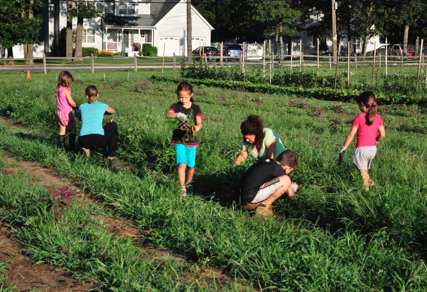 Kid Programs - HeartBeet Farms