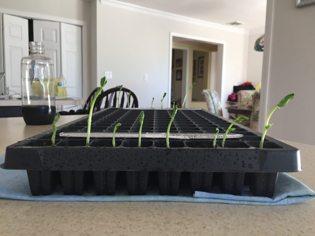 mcenroe organic soil peas