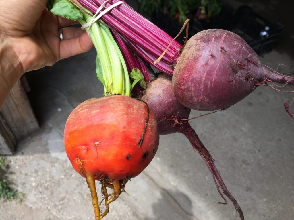 golden and red beet roots from HeartBeet Farms