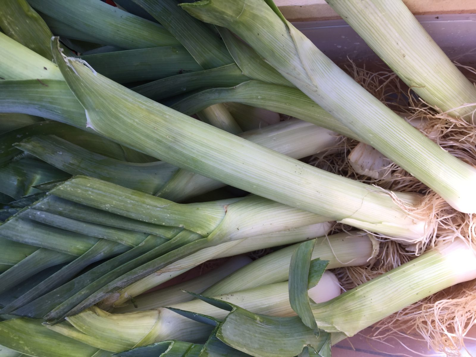 HeartBeet Farms Leeks