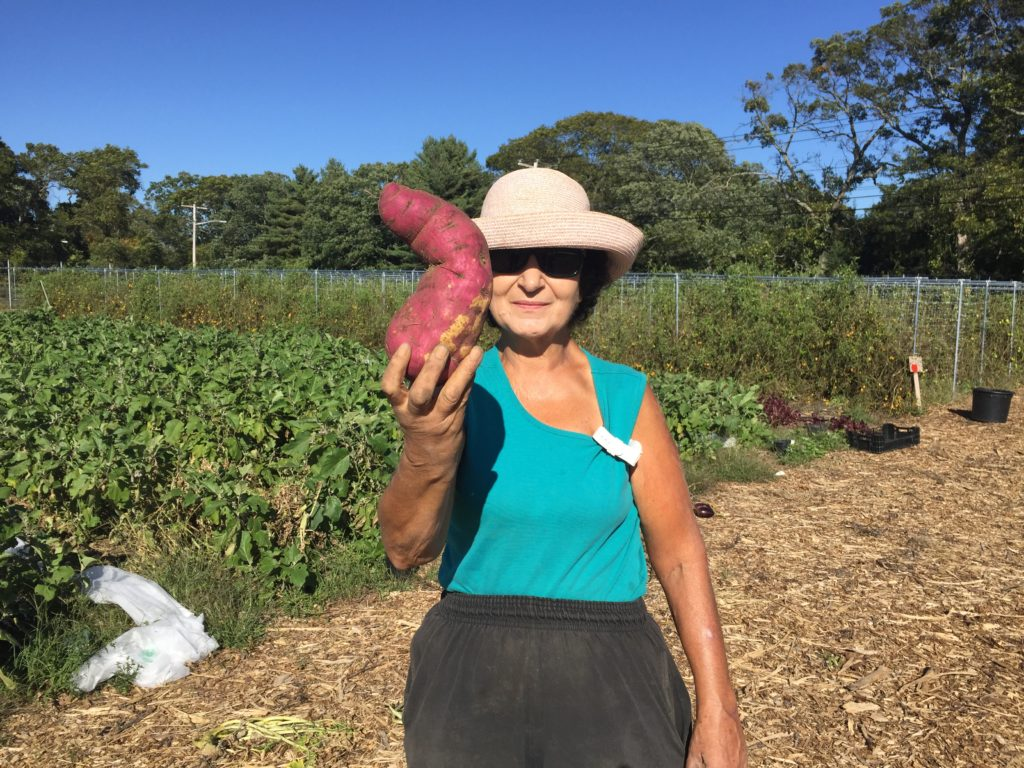 Japanese Sweet Potato from HeartBeet Farms