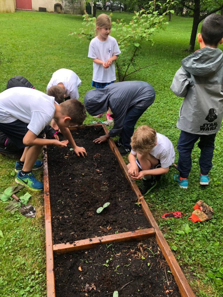 Planting seeds in the school garden