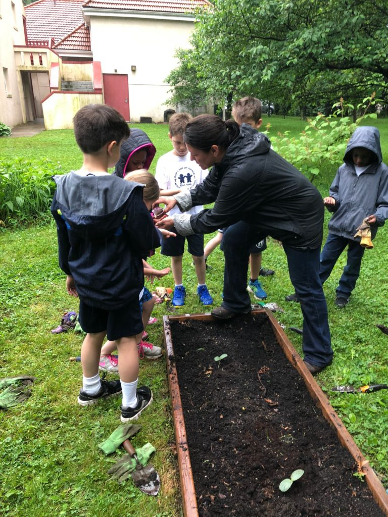 Planting squash in the school garden