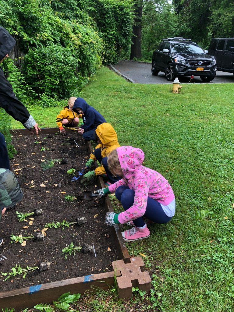 Planting herbs in the school garden