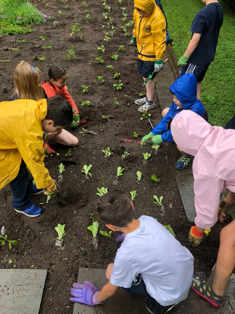 Students working on their school garden