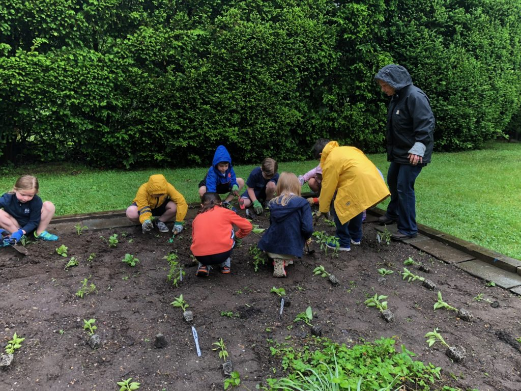 Getting muddy in the school garden