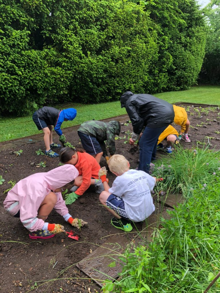 Students hard at work planting in the school garden