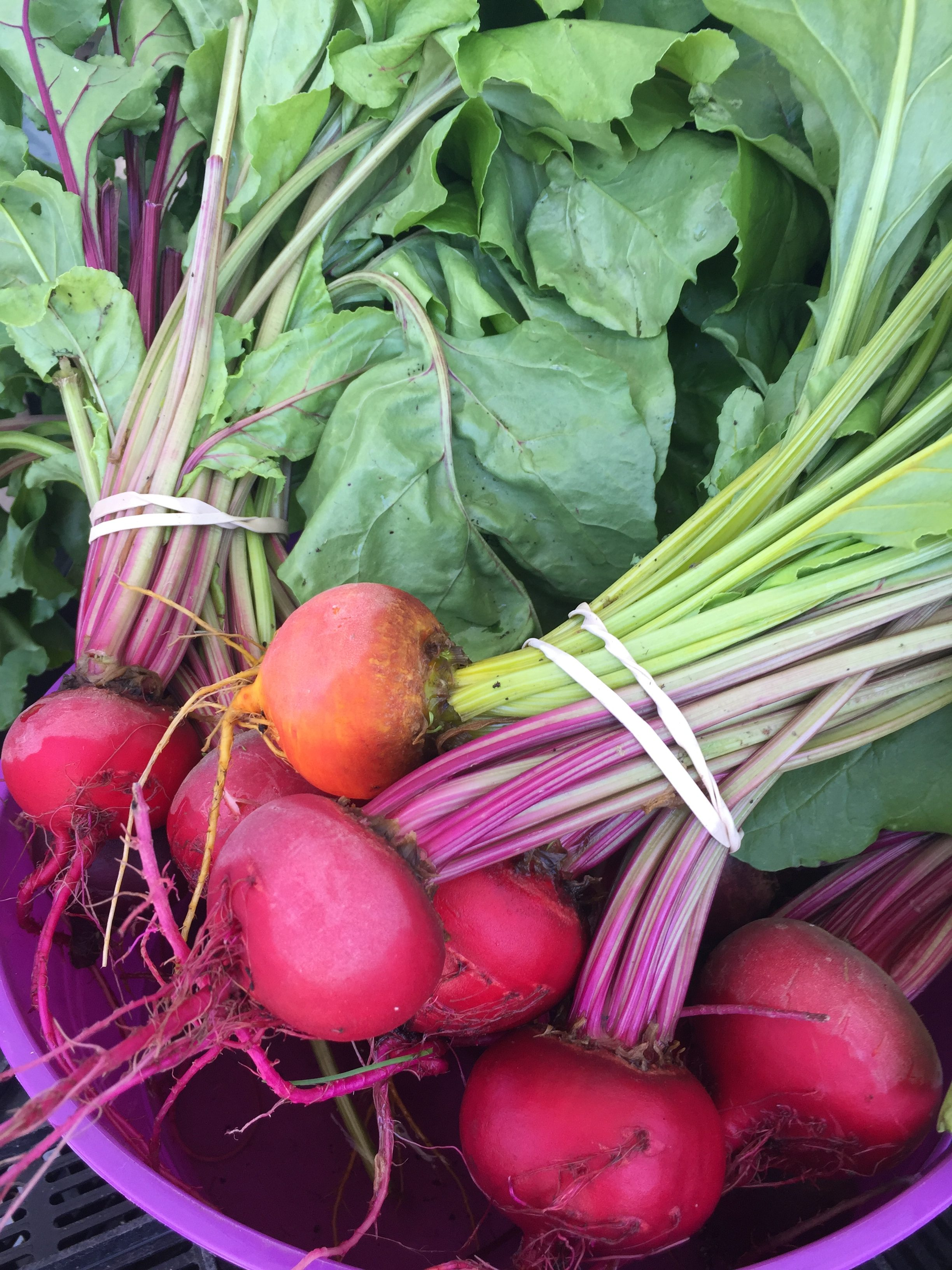 Striped and Golden Beets and Beet Greens from HeartBeet Farms