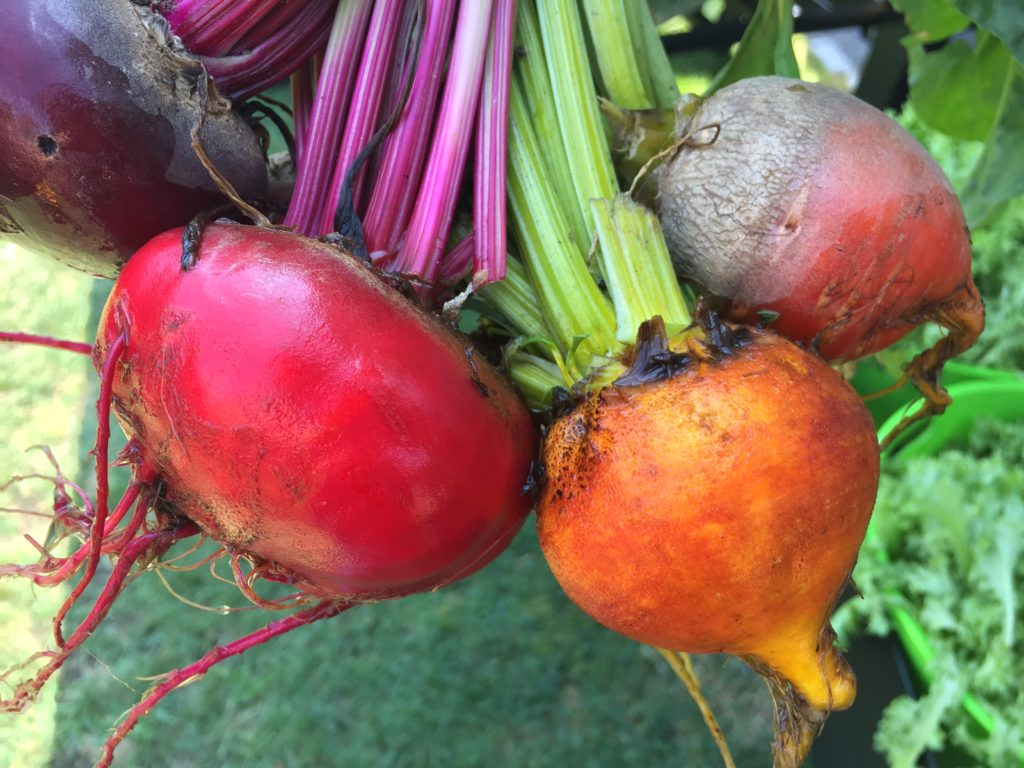 Golden, Rain & Red Beets