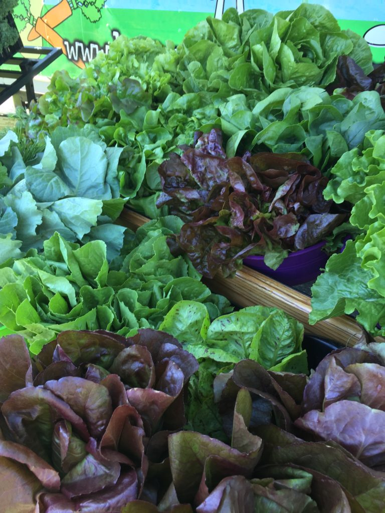 Red Lettuce and Greens from HeartBeet Farms