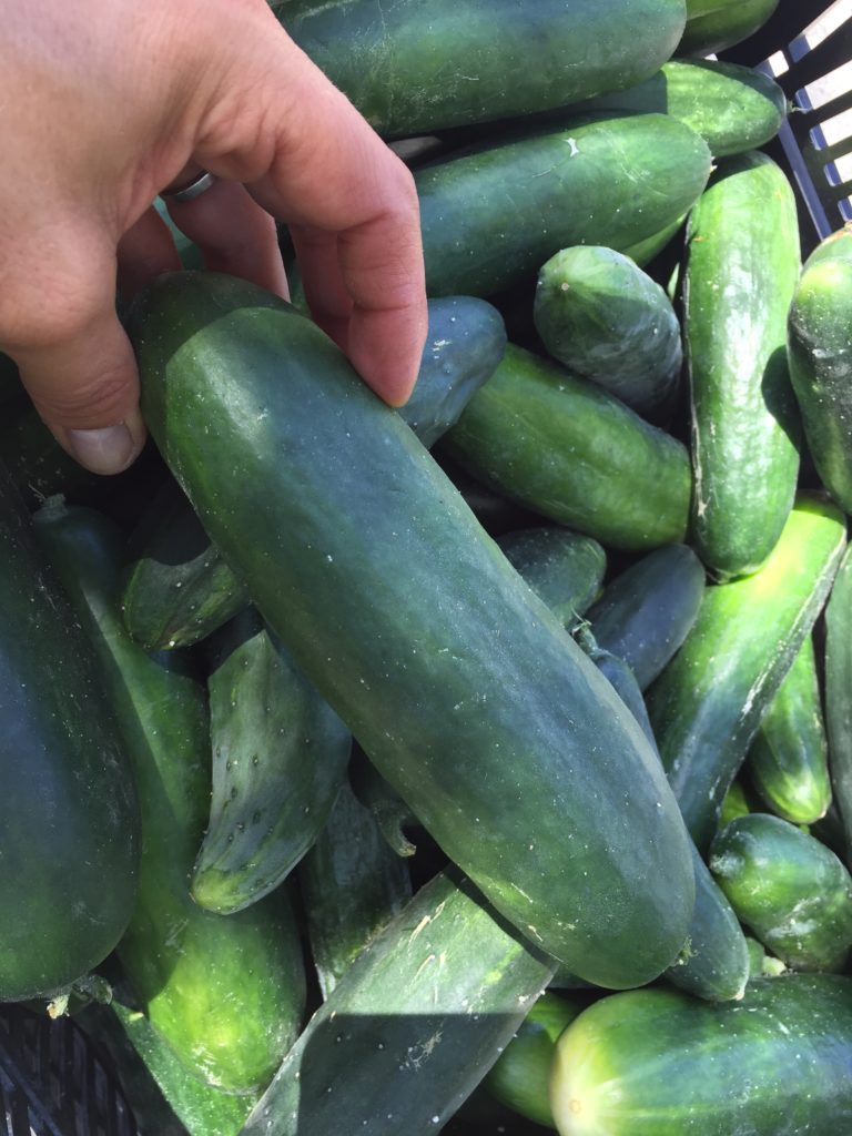 Cucumbers from HeartBeet Farms